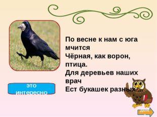 Утка назад Утки- водоплавающие птицы, ближайшие родственники гусей и лебедей