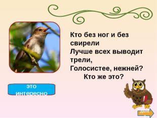 Ласточка — мелкая птица семейства ласточковых, к которому относится до 120 ви