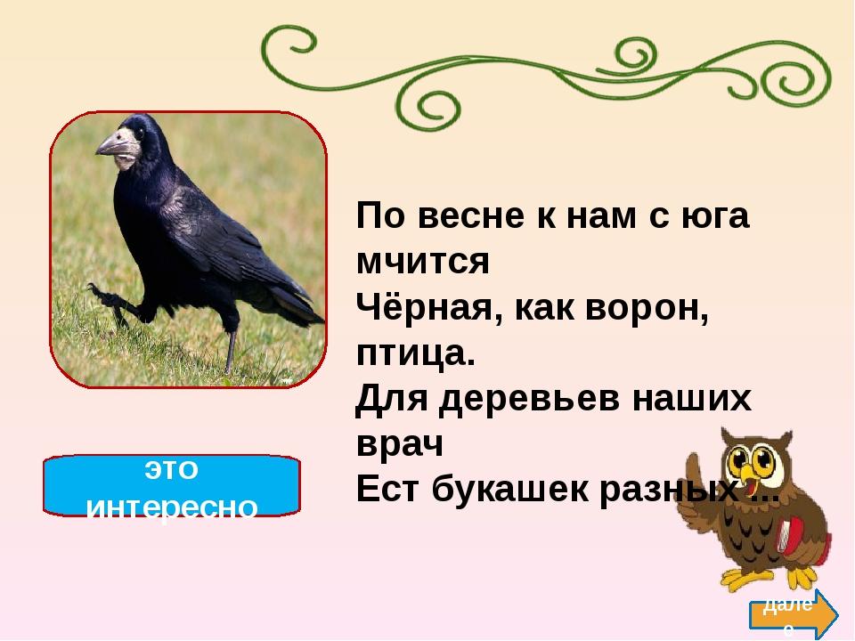 Утка назад Утки- водоплавающие птицы, ближайшие родственники гусей и лебедей...