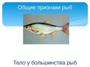 Тело у большинства рыб имеет обтекаемую форму. Общие признаки рыб