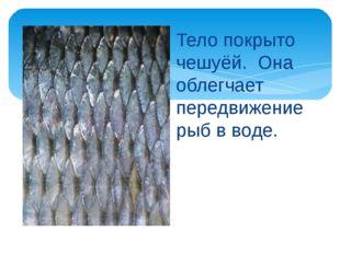 Тело покрыто чешуёй. Она облегчает передвижение рыб в воде.