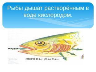 Рыбы дышат растворённым в воде кислородом.