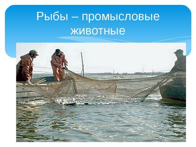 Рыбы – промысловые животные
