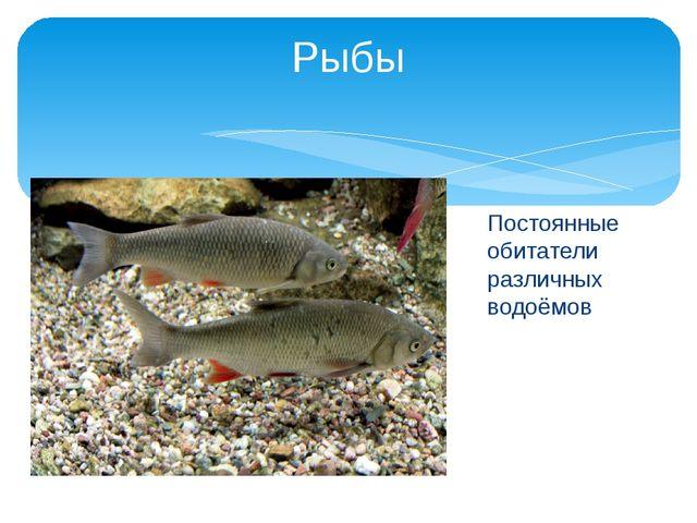 Рыбы Постоянные обитатели различных водоёмов