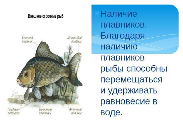 Наличие плавников. Благодаря наличию плавников рыбы способны перемещаться и...