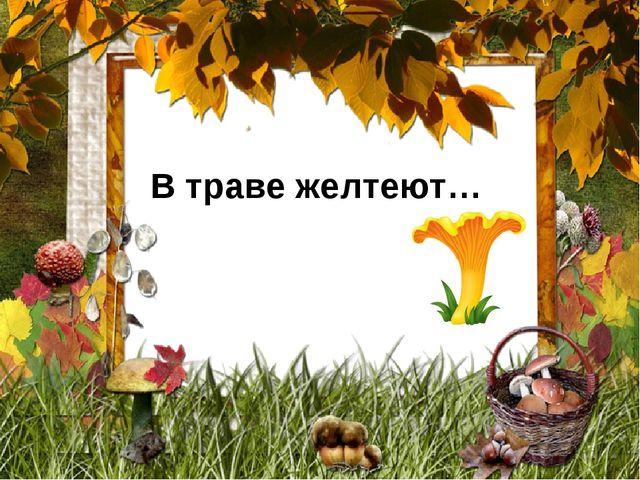 В траве желтеют…