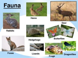 Fauna Hares Rabbits Deer Butterflies Frogs Dragonflies Hedgehogs Lizards Foxes