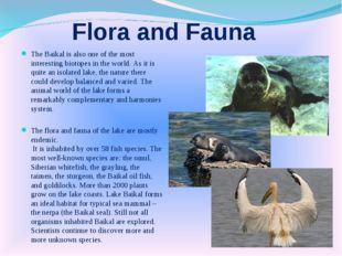 Flora and Fauna The Baikal is also one of the most interesting biotopes in th