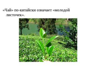 «Чай» по-китайски означает «молодой листочек».