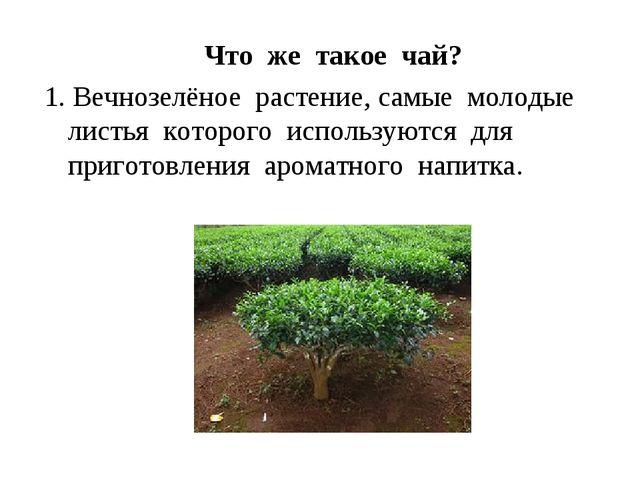 Что же такое чай? 1. Вечнозелёное растение, самые молодые листья которого ис...