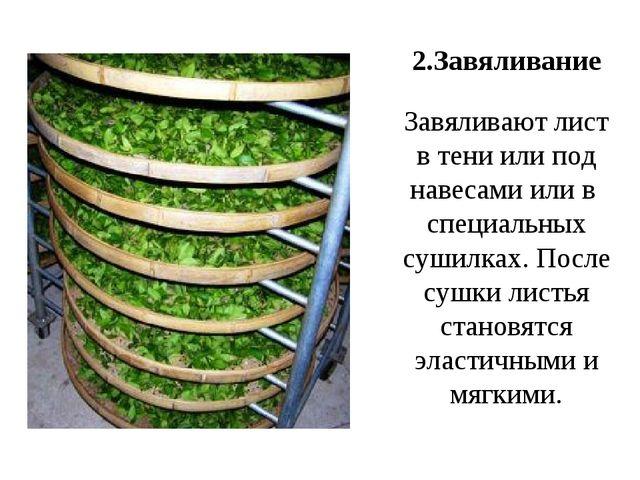 2.Завяливание Завяливают лист в тени или под навесами или в специальных сушил...