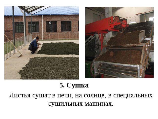5. Сушка Листья сушат в печи, на солнце, в специальных сушильных машинах.