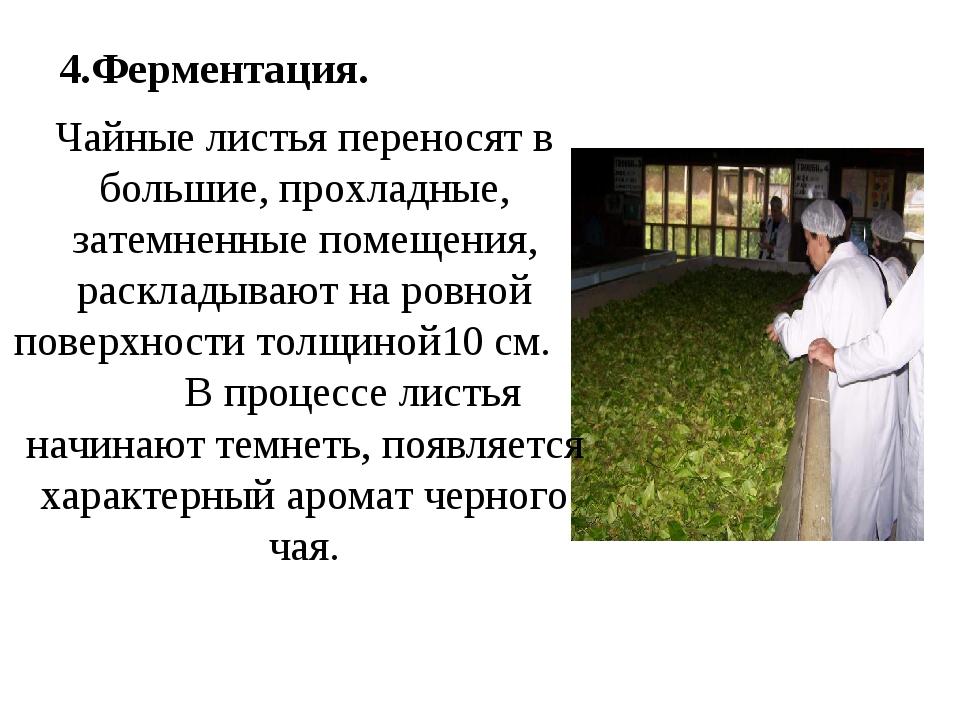 4.Ферментация. Чайные листья переносят в большие, прохладные, затемненные пом...
