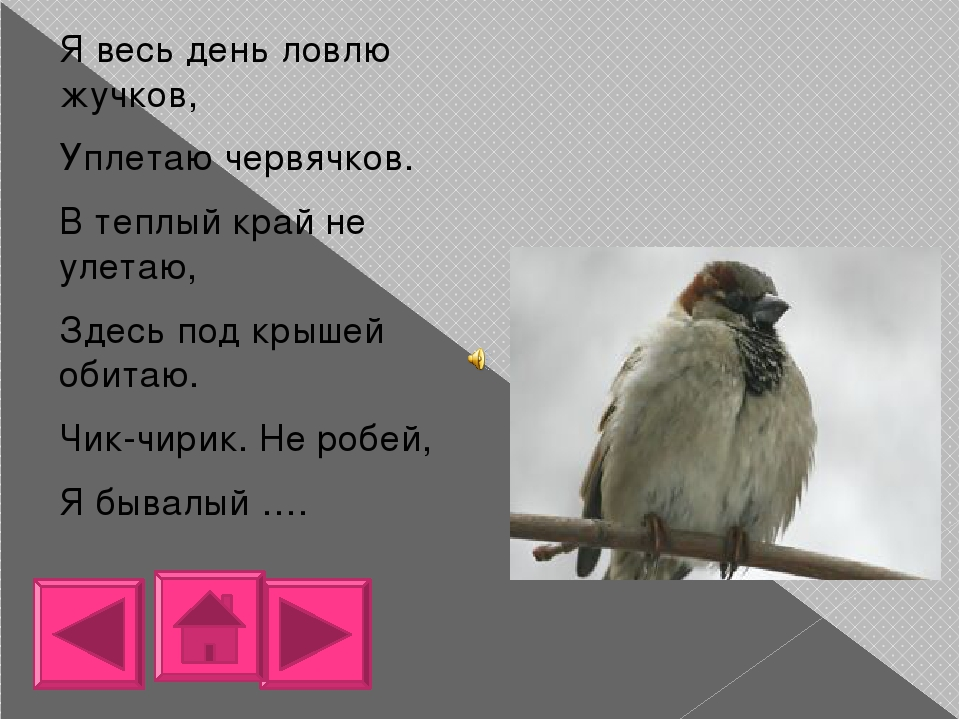 Непоседа пестрая, птица длиннохвостая, Птица говорливая, Самая болтливая