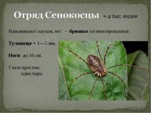 Напоминают пауков, но! → брюшко сегментированное. Туловище ≈ 1—5мм. Ноги до