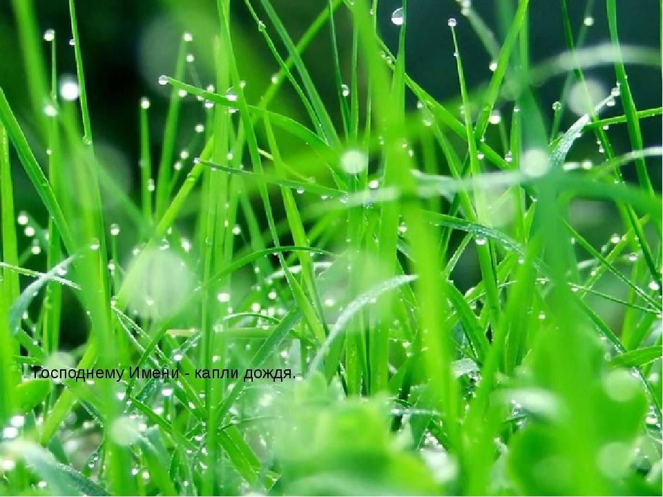 Господнему Имени - капли дождя.