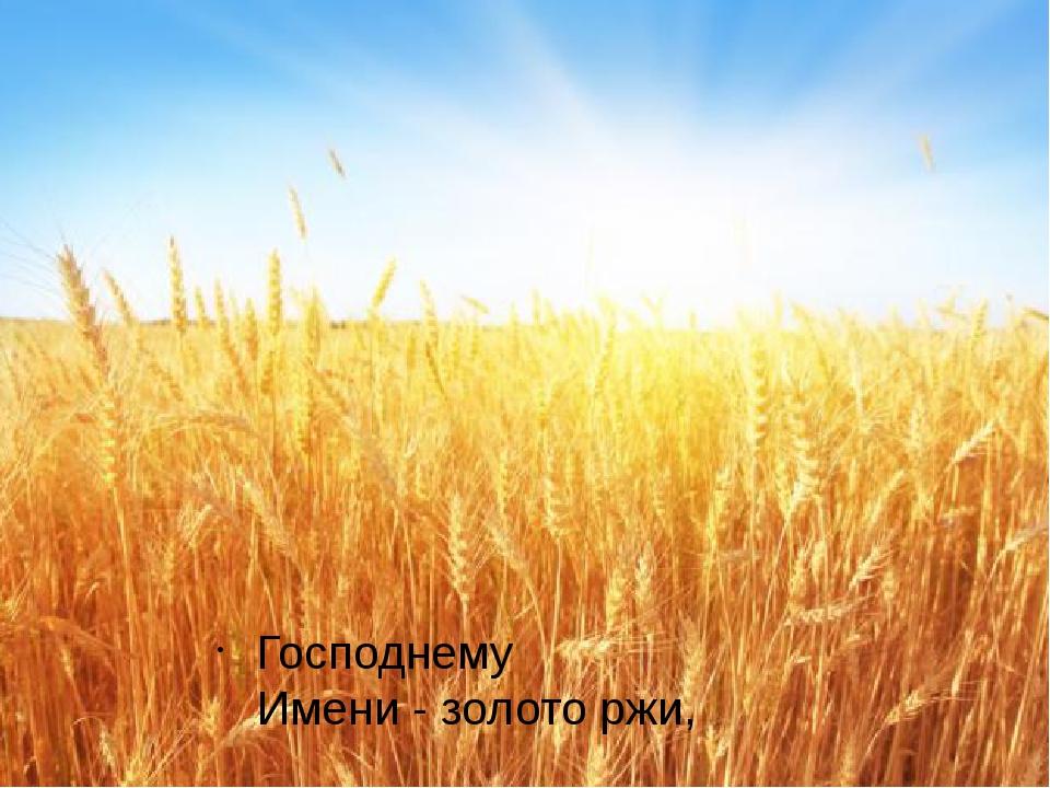 Господнему Имени-золото ржи,