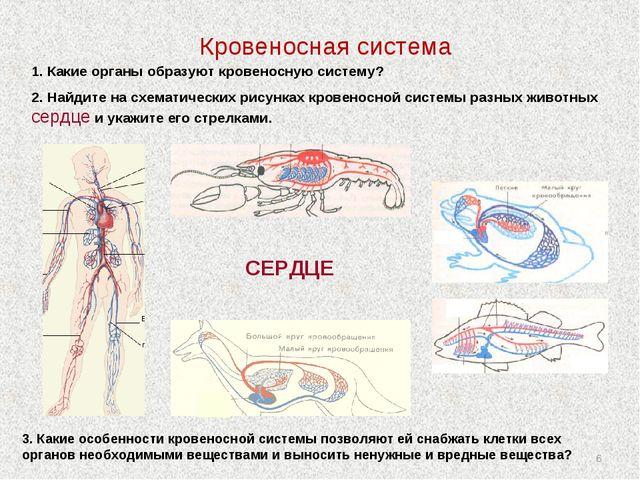 * Кровеносная система СЕРДЦЕ 1. Какие органы образуют кровеносную систему? 2....