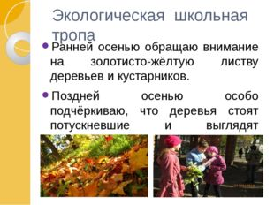 Экологическая школьная тропа Ранней осенью обращаю внимание на золотисто-жёлт