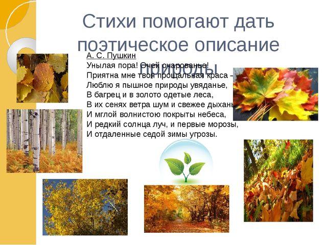 Стихи помогают дать поэтическое описание природы А. С. Пушкин Унылая пора! О...