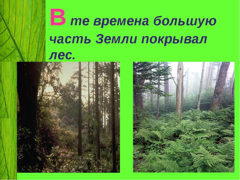 В те времена большую часть Земли покрывал лес.