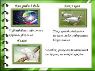 Белая ворона Как с гуся вода Как рыба в воде Чувствовать себя очень хорошо