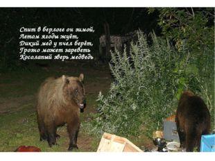 Спит в берлоге он зимой, Летом ягоды жуёт, Дикий мед у пчел берёт, Грозно