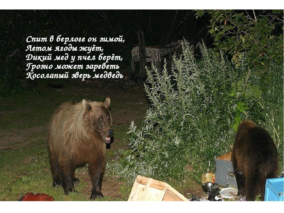 Спит в берлоге он зимой, Летом ягоды жуёт, Дикий мед у пчел берёт, Грозно...
