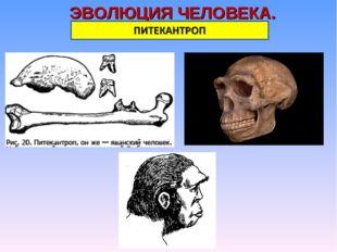 ЭВОЛЮЦИЯ ЧЕЛОВЕКА.