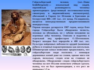 Гейдельбергский человек (лат.Homo heidelbergensis)— ископаемый вид людей, е