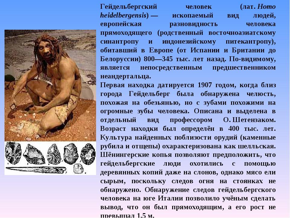 Гейдельбергский человек (лат.Homo heidelbergensis)— ископаемый вид людей, е...
