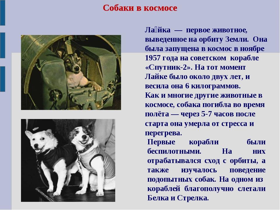 Собаки в космосе Первые корабли были беспилотными. На них отрабатывался сход...