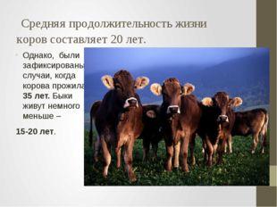 Средняя продолжительность жизни коров составляет 20 лет. Однако, были зафикс