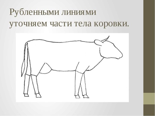 Рубленными линиями уточняем части тела коровки.