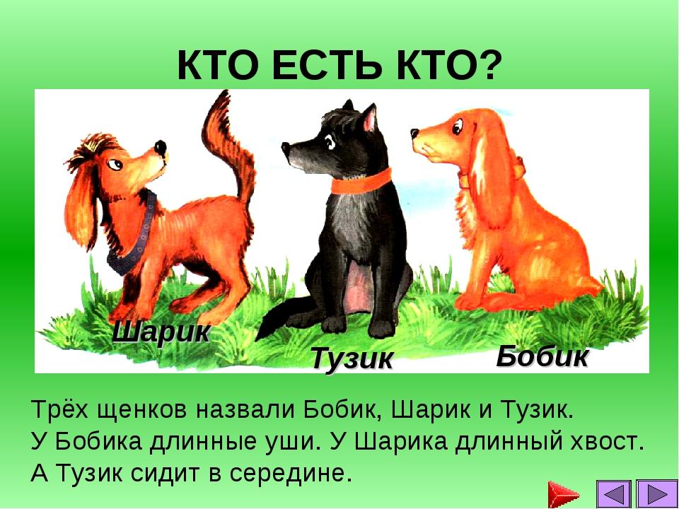 КТО ЕСТЬ КТО? Трёх щенков назвали Бобик, Шарик и Тузик. У Бобика длинные уши....