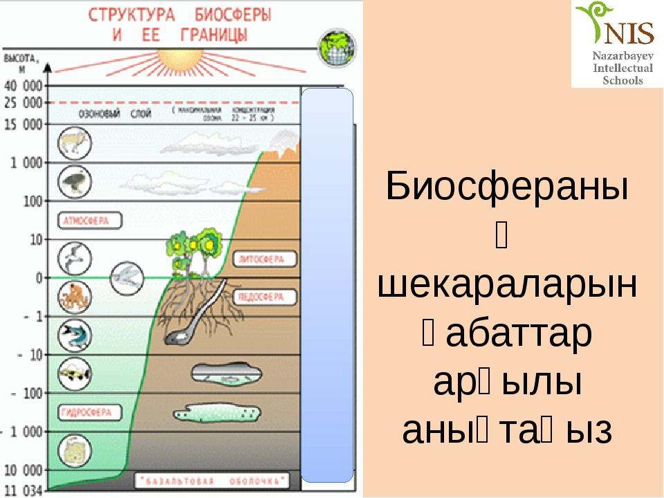 Биосфераның шекараларын қабаттар арқылы анықтаңыз