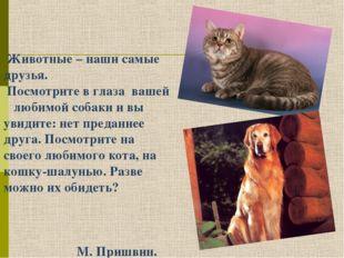 Животные – наши самые друзья. Посмотрите в глаза вашей любимой собаки и вы у