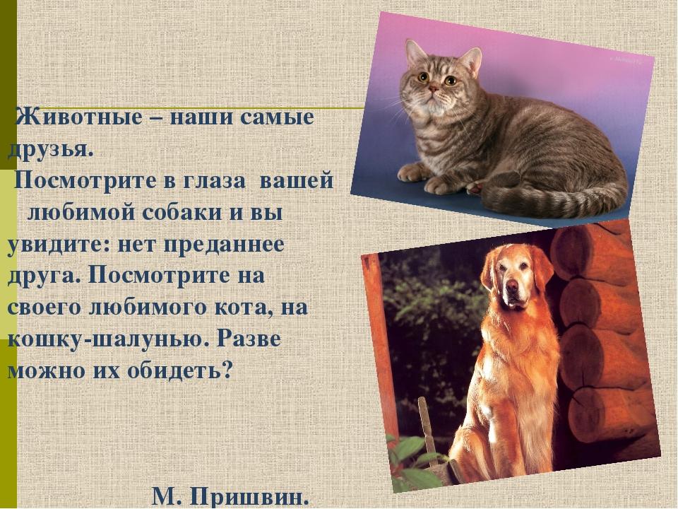 Животные – наши самые друзья. Посмотрите в глаза вашей любимой собаки и вы у...