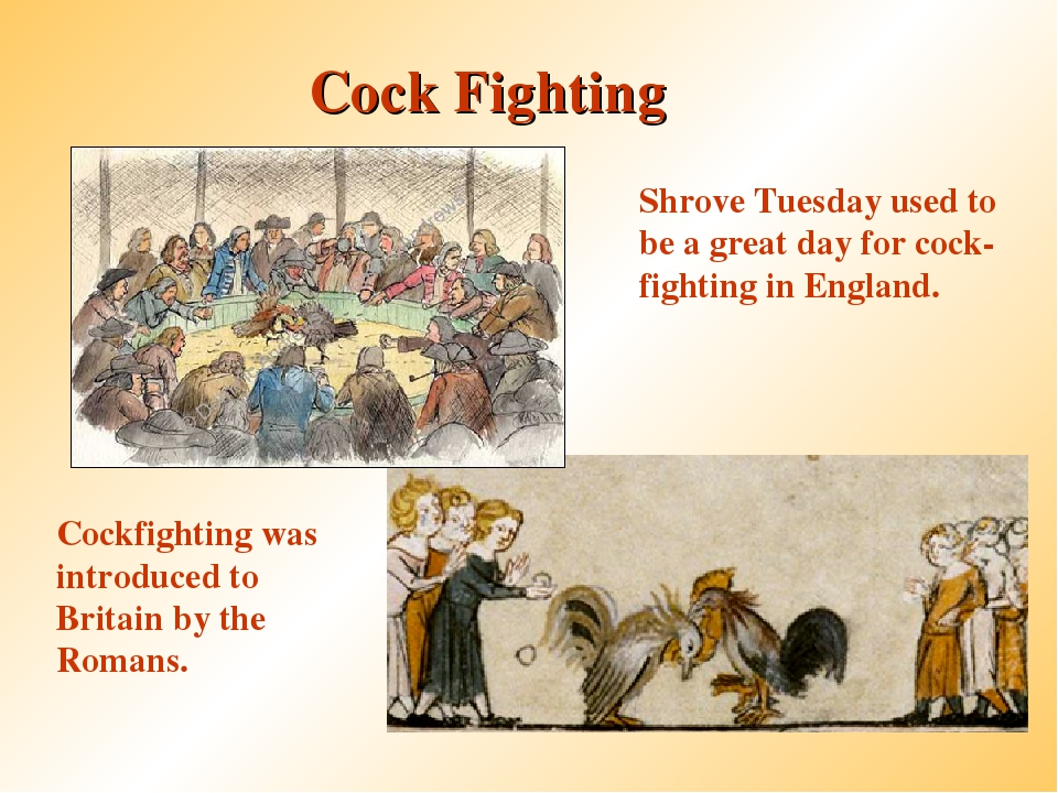 Cock Fighting Cockfighting was introduced to Britain by the Romans. Shrove Tu...