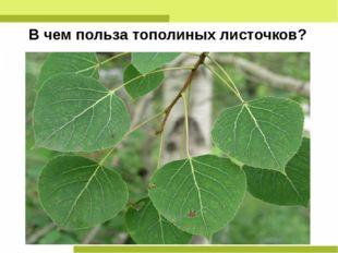 В чем польза тополиных листочков?