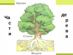 Части дерева