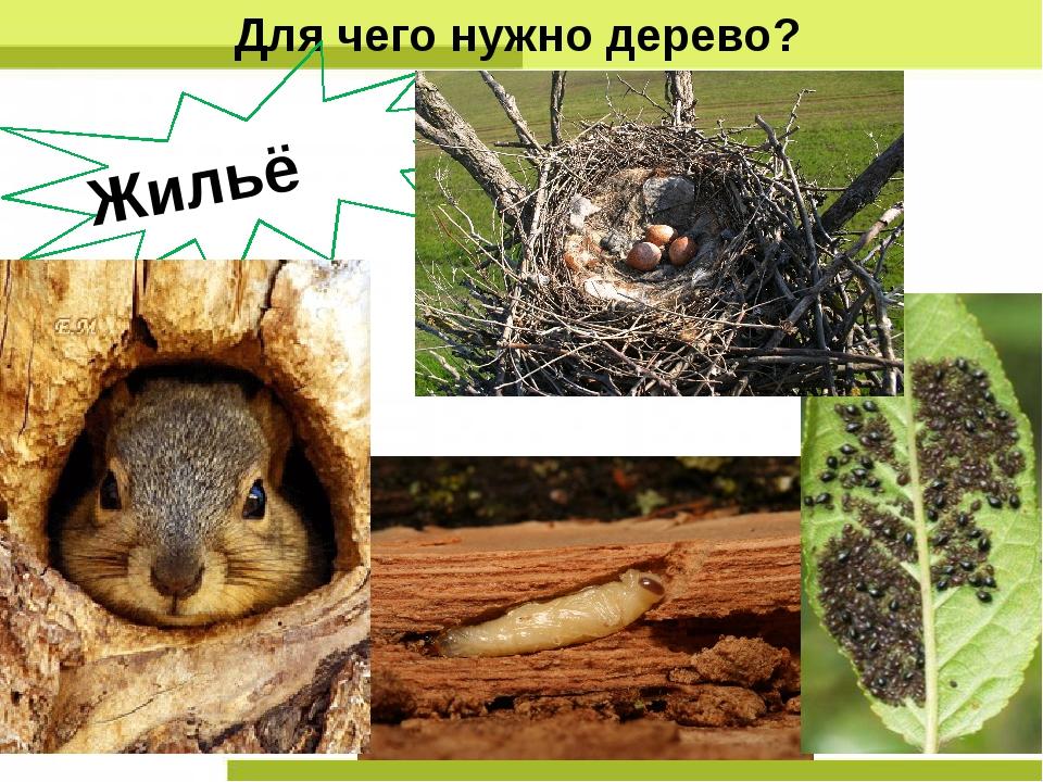 Для чего нужно дерево? Жильё