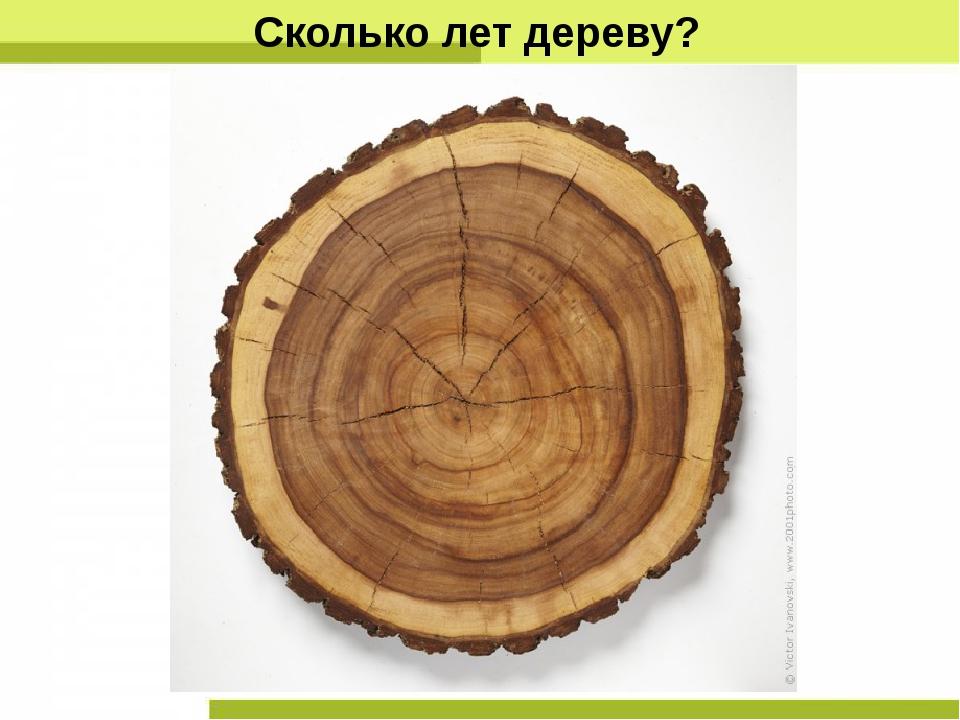 Сколько лет дереву?