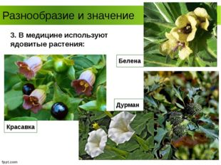Разнообразие и значение Белена 3. В медицине используют ядовитые растения: Кр