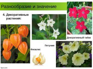 Разнообразие и значение 4. Декоративные растения: Петуния Физалис Декоративны