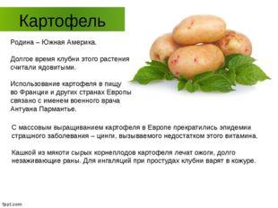 Картофель Родина – Южная Америка. Долгое время клубни этого растения считали