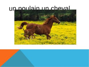 un poulain,un cheval