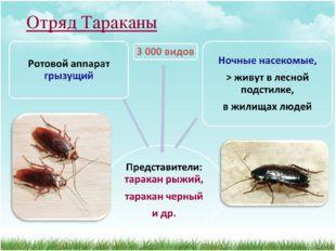 Отряд Тараканы