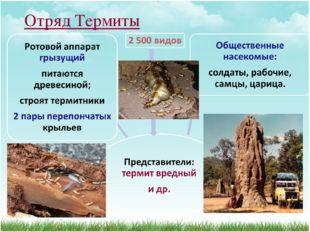 Отряд Термиты