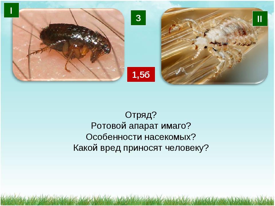 3 І ІІ Отряд? Ротовой апарат имаго? Особенности насекомых? Какой вред принося...